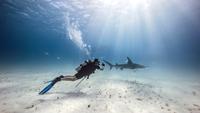 Underwater view of male diver watching shark near seabed 11015314430| 写真素材・ストックフォト・画像・イラスト素材|アマナイメージズ