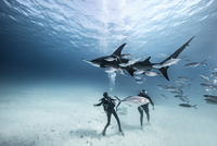 Underwater view of two divers on seabed amongst fish 11015314440| 写真素材・ストックフォト・画像・イラスト素材|アマナイメージズ
