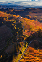 View from hot air balloon of rolling landscape and autumn vineyards, Langhe, Piedmont, Italy 11015316416| 写真素材・ストックフォト・画像・イラスト素材|アマナイメージズ