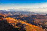 View from hot air balloon of rolling landscape and autumn vineyards, Langhe, Piedmont, Italy 11015316417| 写真素材・ストックフォト・画像・イラスト素材|アマナイメージズ