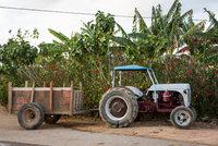 Tractor and trailer parked on roadside, Vinales, Cuba 11015316743| 写真素材・ストックフォト・画像・イラスト素材|アマナイメージズ