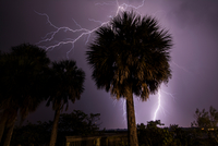 Lightning strikes behind palm trees at Merritt Island, viewed from the State Road 520 Causeway bridge crossing Indian River Lago 11015319450| 写真素材・ストックフォト・画像・イラスト素材|アマナイメージズ