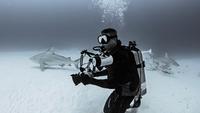 Diver with Bull Sharks, underwater view, Playa del Carmen, Mexico 11015319526| 写真素材・ストックフォト・画像・イラスト素材|アマナイメージズ
