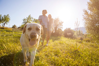 Young couple walking dog in sunlit rural field, Majorca, Spain 11015320188| 写真素材・ストックフォト・画像・イラスト素材|アマナイメージズ