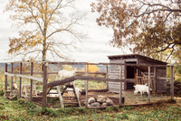 Goats on pen in farm, Guilford, Vermont, USA 11015320400| 写真素材・ストックフォト・画像・イラスト素材|アマナイメージズ