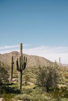 Cacti, Wadell, Arizona, USA 11015320554| 写真素材・ストックフォト・画像・イラスト素材|アマナイメージズ
