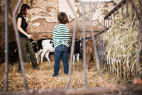 Female farmer and boy looking at calves on organic dairy farm 11015321006| 写真素材・ストックフォト・画像・イラスト素材|アマナイメージズ