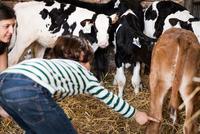 Female farmer and boy pointing at calves on organic dairy farm 11015321007| 写真素材・ストックフォト・画像・イラスト素材|アマナイメージズ