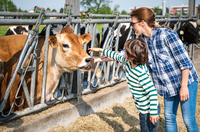 Female farmer and boy petting cow on organic dairy farm 11015321018| 写真素材・ストックフォト・画像・イラスト素材|アマナイメージズ