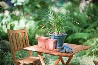 Potted plant on table in backyard 11015321686| 写真素材・ストックフォト・画像・イラスト素材|アマナイメージズ