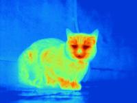 Thermal image of cat crouched on floor 11015322541| 写真素材・ストックフォト・画像・イラスト素材|アマナイメージズ
