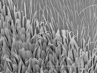 Magnified view of hairs on moth wing 11015322998| 写真素材・ストックフォト・画像・イラスト素材|アマナイメージズ