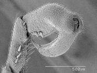 Magnified view of hanging fly tarscus 11015323002| 写真素材・ストックフォト・画像・イラスト素材|アマナイメージズ