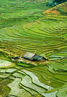 Aerial view of house in divided farmland 11015323327| 写真素材・ストックフォト・画像・イラスト素材|アマナイメージズ