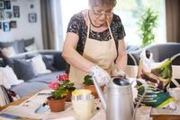 Senior adult woman potting plants on table 11015325301  写真素材・ストックフォト・画像・イラスト素材 アマナイメージズ