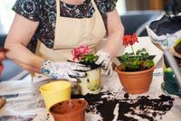 Senior adult woman potting plants on table 11015325302  写真素材・ストックフォト・画像・イラスト素材 アマナイメージズ