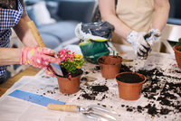 Senior adult woman potting plants on table 11015325304  写真素材・ストックフォト・画像・イラスト素材 アマナイメージズ