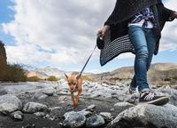 Neck down view of woman walking dog on rocky riverbed 11015325398| 写真素材・ストックフォト・画像・イラスト素材|アマナイメージズ