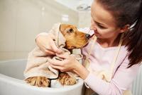 Female groomer and cocker spaniel gazing at each other at dog grooming salon 11015326174| 写真素材・ストックフォト・画像・イラスト素材|アマナイメージズ