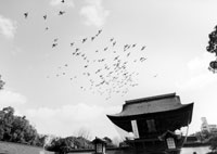 birds flying from a temple