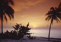 Silhouette of palm trees on beach