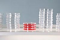 Three used Petri dishes and stacks of unused Petri dishes 11016020613| 写真素材・ストックフォト・画像・イラスト素材|アマナイメージズ