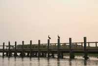 Two pelicans, each resting on the wooden poles of a jetty
