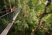 A woman looking down from a tree canopy walkway, Teman Negar