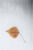 Leaf stuck to rain covered window