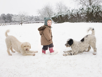 Baby girl with Portuguese Water Dogs in snow