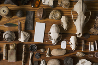 Collection of ancient remains displayed on table
