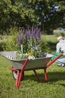 Flower pots in wheelbarrow with woman gardening in background