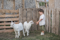 Cute boy playing with baby goats outdoors