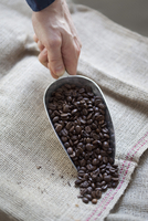 Close-up of hand pouring coffee beans on sack