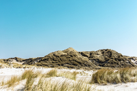 Grass growing on sandy beach against clear sky