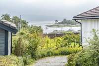 Footpath amidst plants and sheds with sea in background