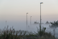 Street lights and plants in foggy weather during sunset
