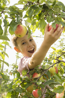 Portrait of happy boy picking apple from tree