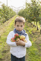 Portrait of cute boy holding apples at orchard