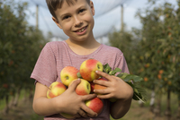 Portrait of smiling boy holding apples at orchard
