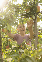 Happy boy picking apple from tree