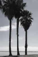 Palm trees in front of sea against sky