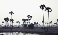 Trees on landscape against clear sky, Phnom Penh, Cambodia