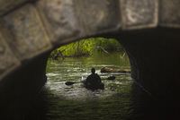 Rear view of man rowing boat under arch bridge