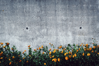 Flowers growing against wall