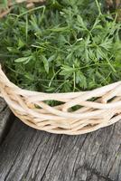 Close-up of fresh cilantro in basket