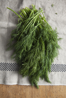 High angle view of dill leaves on cloth
