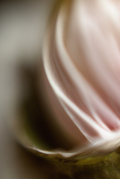 Extreme close-up of pink flower petal