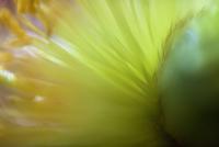 Detail shot of flower pollens