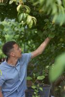 Young man harvesting gooseberries in park